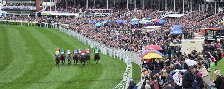 Starty w wyścigach konnych