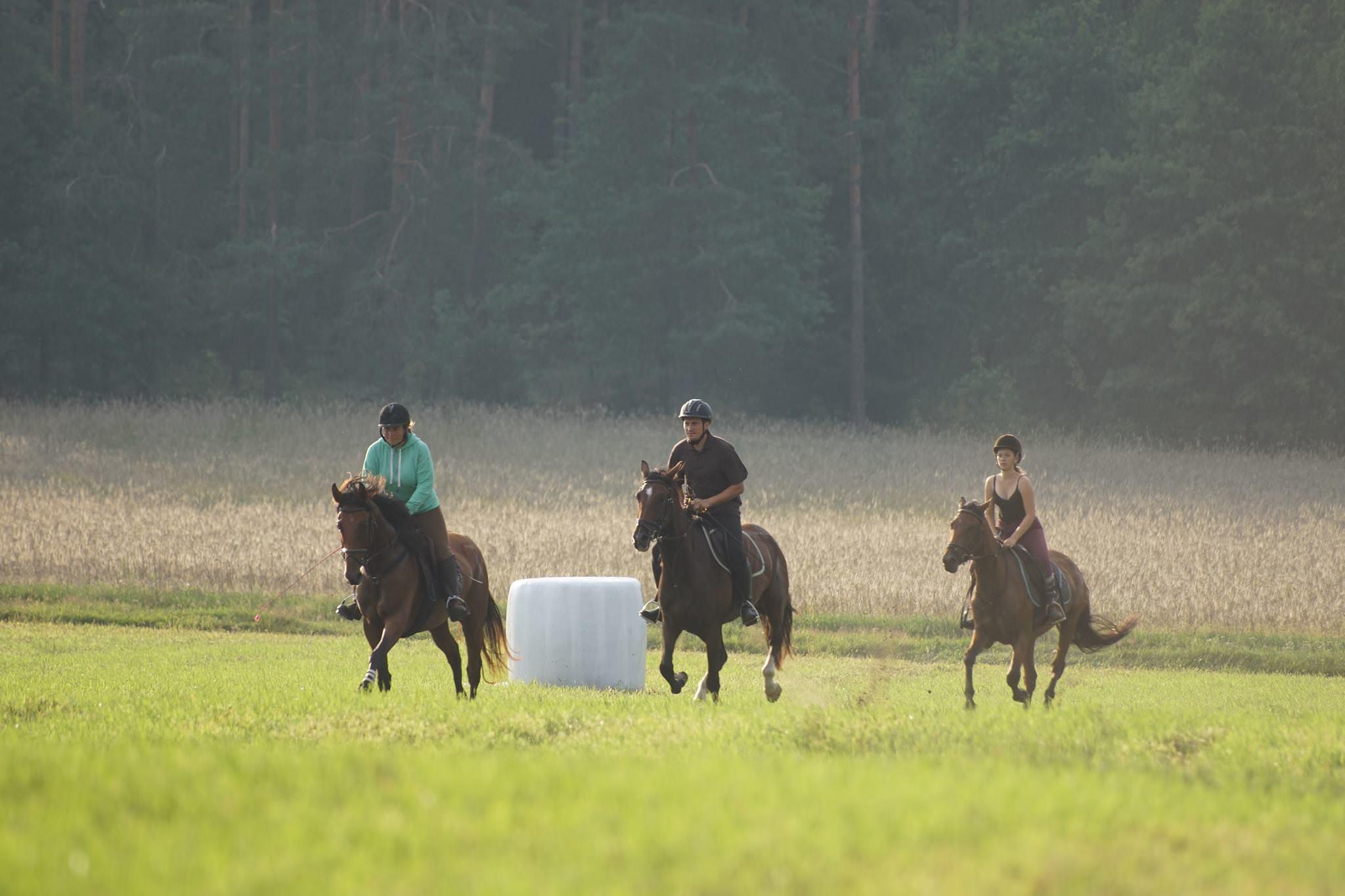 Obozy jeździeckie dla dorosłych